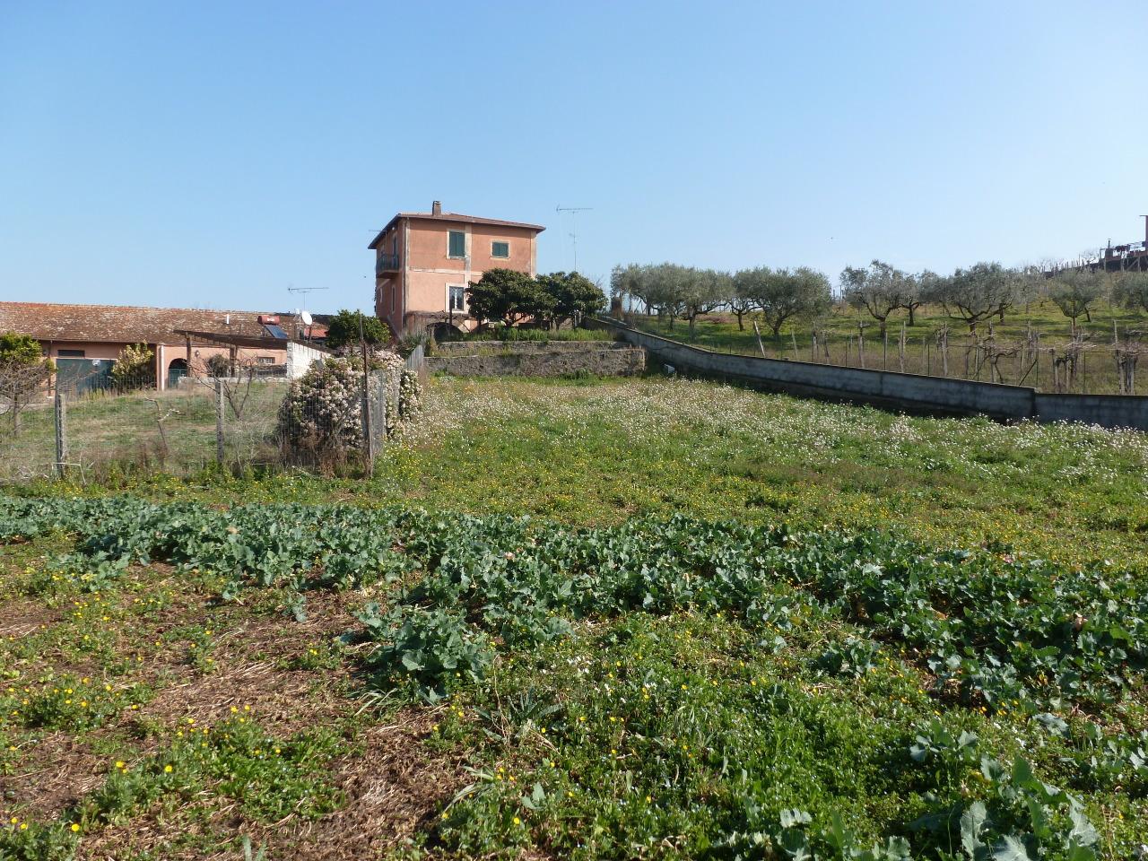 Terreno Agricolo in Vendita a Frascati