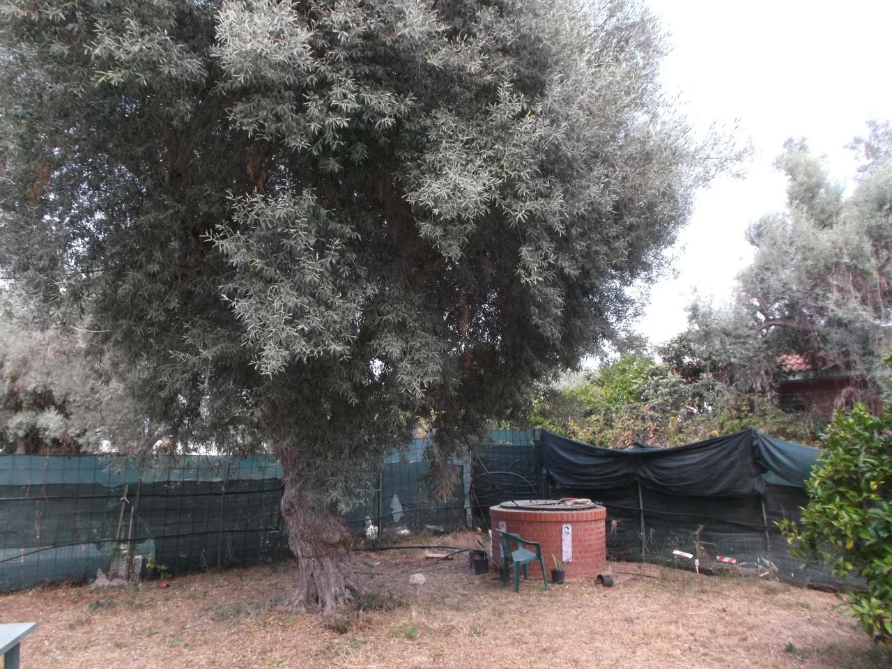 Appartamenti e Attici SIRACUSA vendita  Pizzuta Scala Greca  Schiavone Immobiliare
