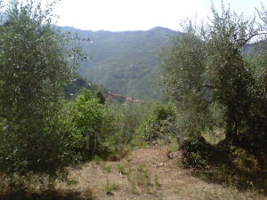 Agricolo, Apricale