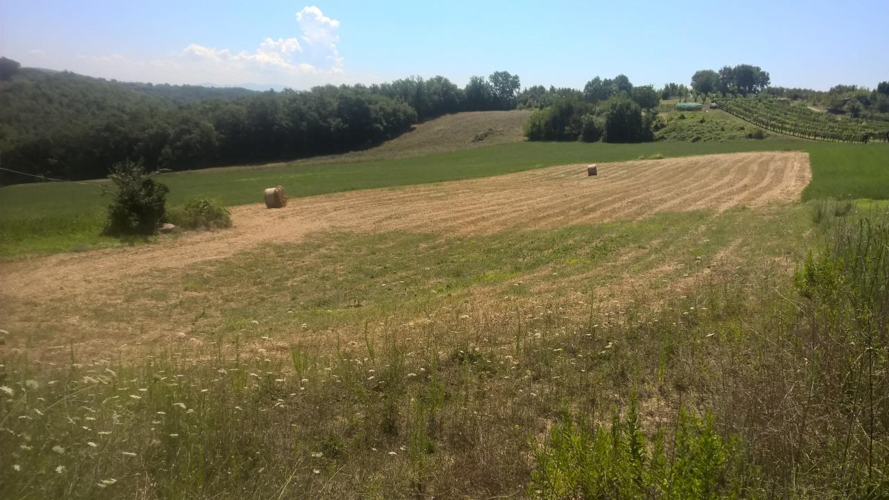 Agricolo - Seminativo a Lugnano in Teverina Rif.7628536