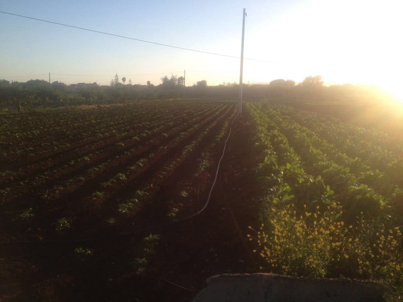 Agricolo - Seminativo a COLUMBA - PAOLO ORSI, Siracusa Rif.6046543