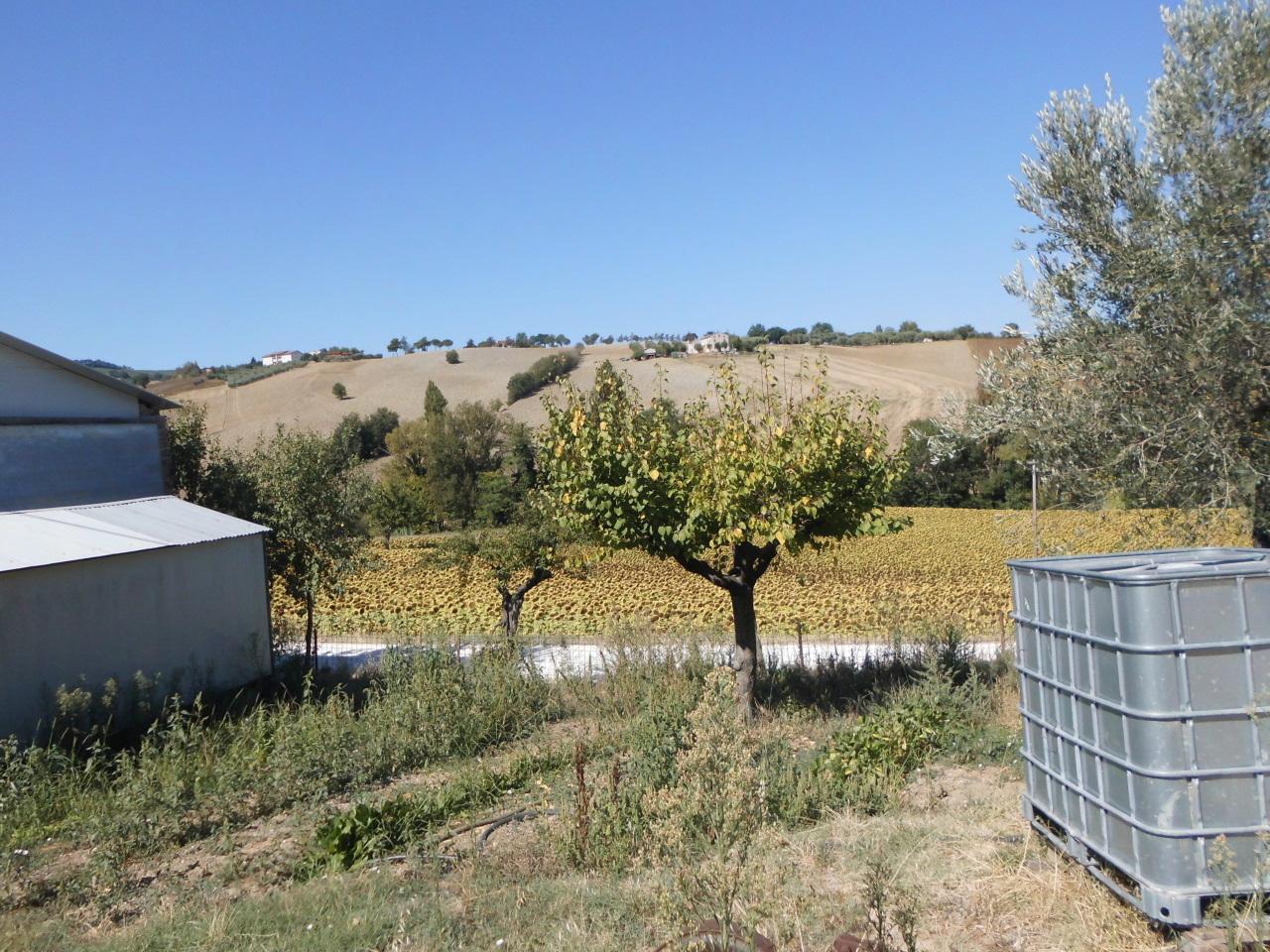 Terreno Agricolo in vendita a San Paolo di Jesi, 9999 locali, prezzo € 300.000 | CambioCasa.it