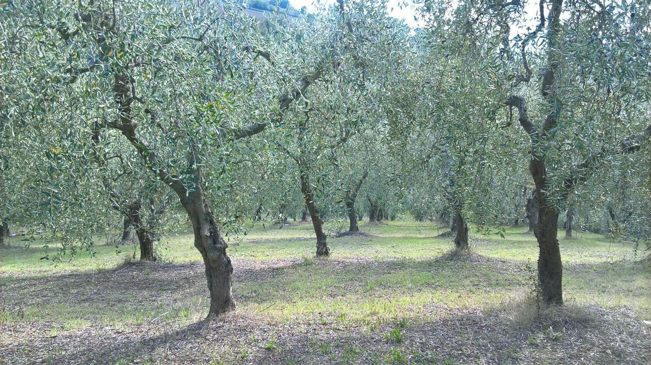 Terreno Agricolo in vendita a Lugnano in Teverina, 9999 locali, prezzo € 21.000 | Cambio Casa.it
