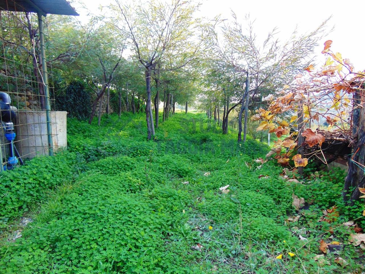 Terreno Agricolo in Vendita a Taggia