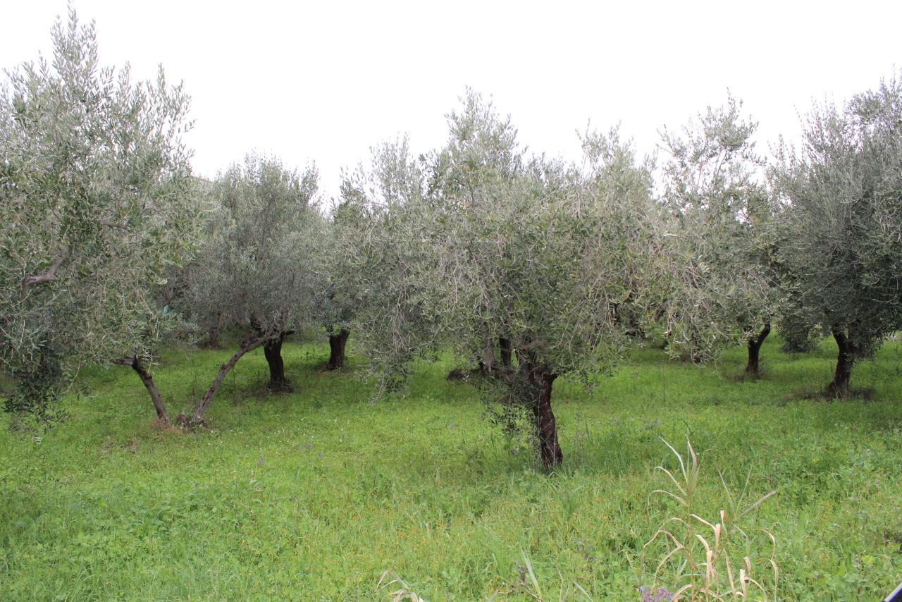 Terreno agricolo in vendita a Mozzagrogna (CH)