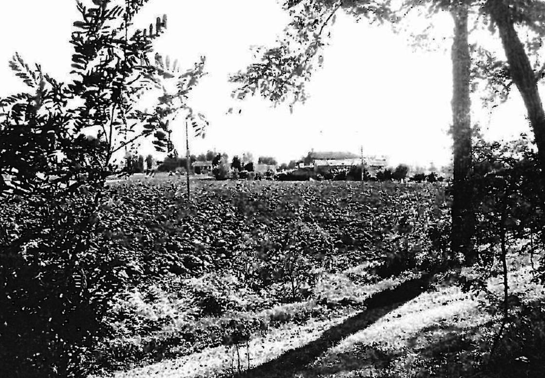 Agricolo - Seminativo a Pontecurone Rif.11617058