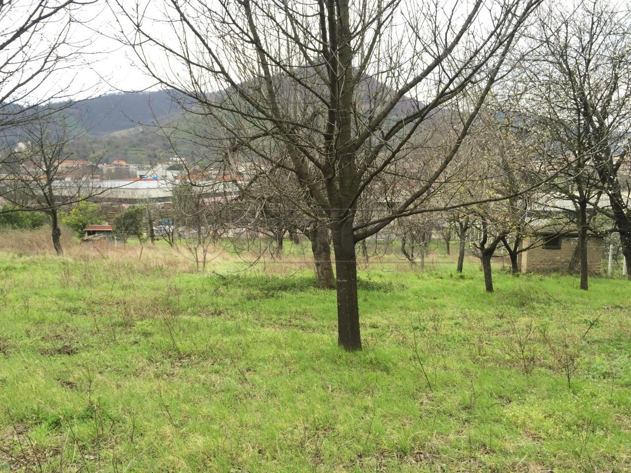 Agricolo - Frutteto a Siano Rif.9981834