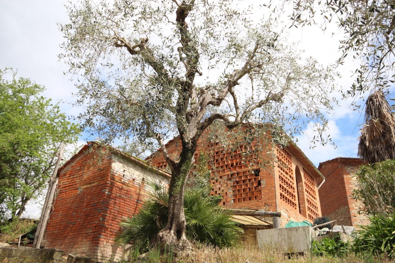 IA00649 Capannori Gragnano