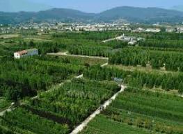 Terreno Agricolo in vendita a Ponte Buggianese, 1 locali, prezzo € 700.000 | Cambio Casa.it