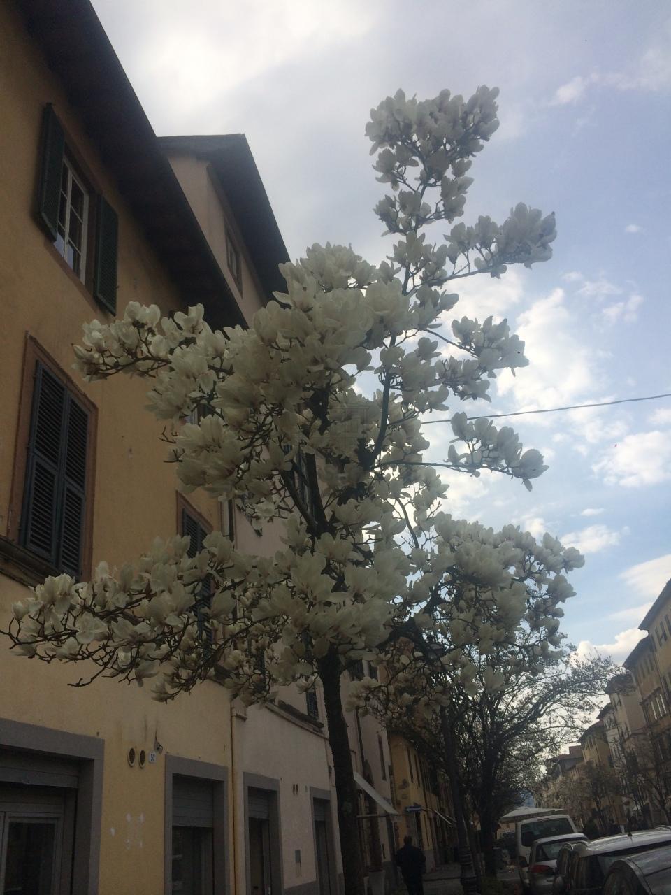 Appartamento Lucca Centro storico IA02937-1 img 9