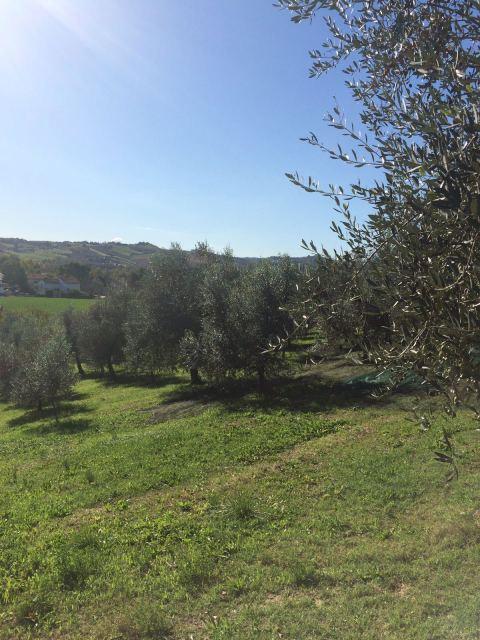 Vai alla scheda: Terreno  Residenziale Vendita - Forlì (FC) - Codice -49439