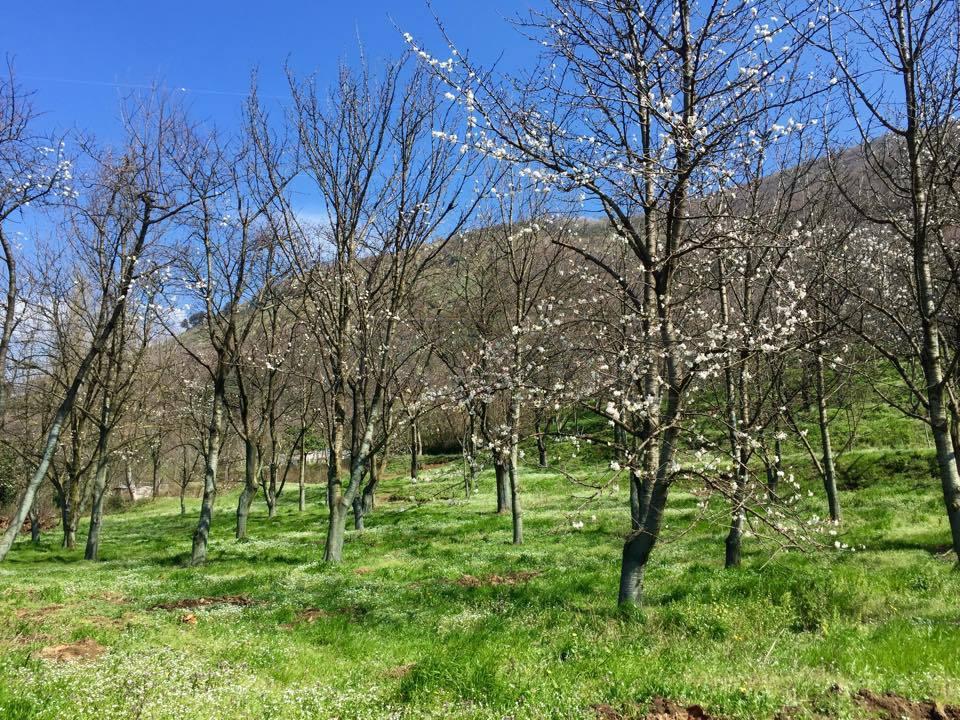 Agricolo - Frutteto a Castel San Giorgio Rif.10035495