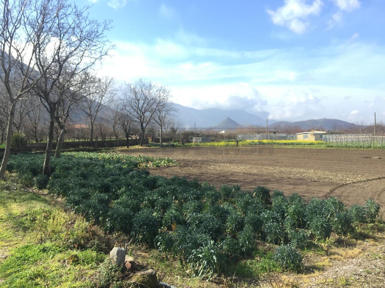 Agricolo - Seminativo a Castel San Giorgio Rif.9981833