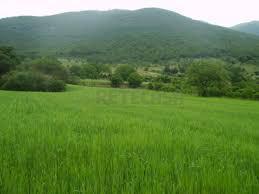 Terreno Agricolo in vendita a Arzignano, 9999 locali, prezzo € 196.000 | Cambio Casa.it