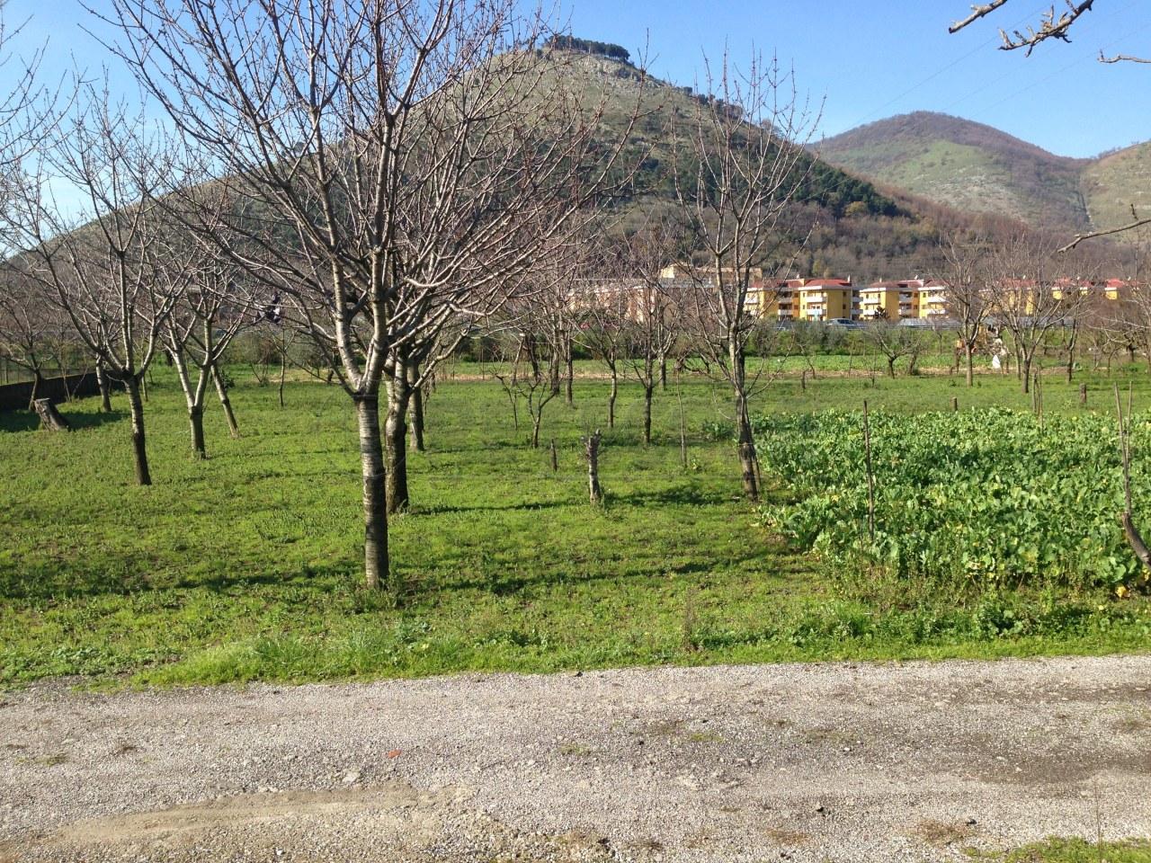 Terreno Agricolo in vendita a Castel San Giorgio, 9999 locali, prezzo € 55.000 | Cambio Casa.it
