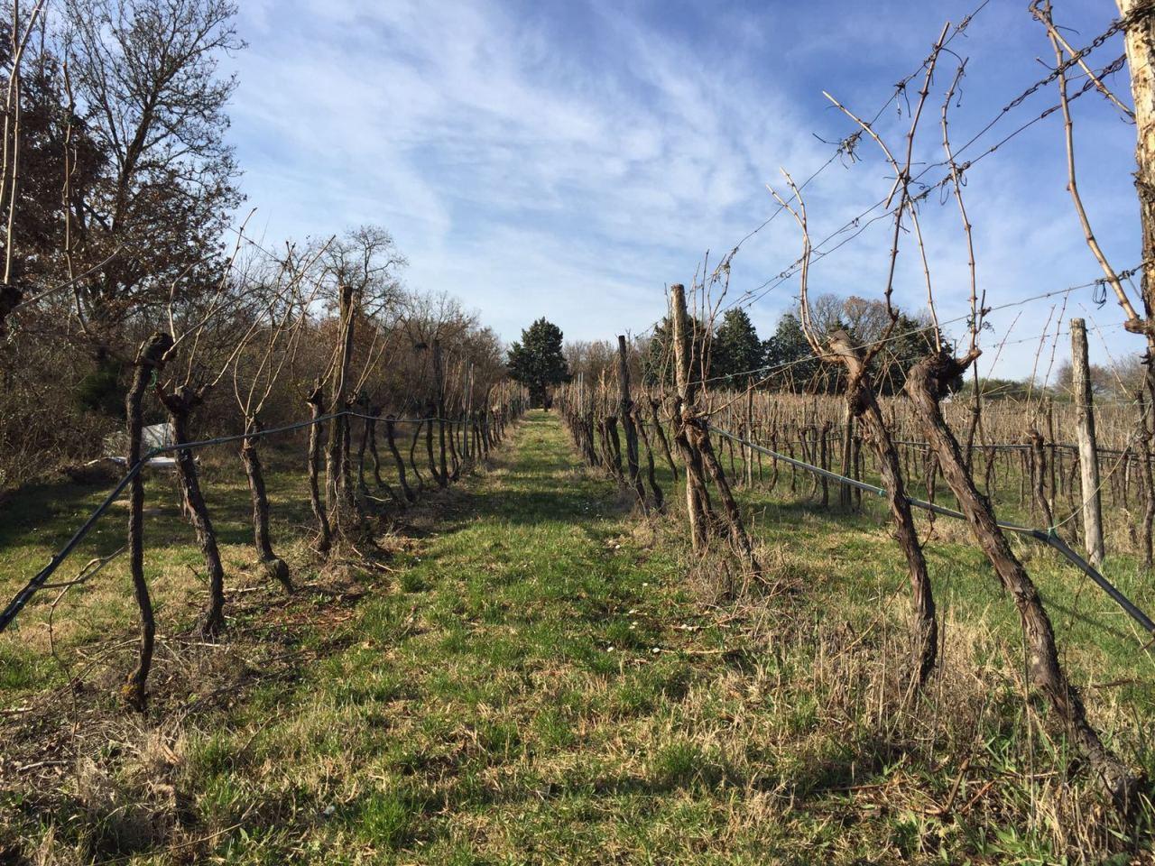 Terreno Agricolo in vendita a Alonte, 1 locali, prezzo € 150.000 | Cambio Casa.it