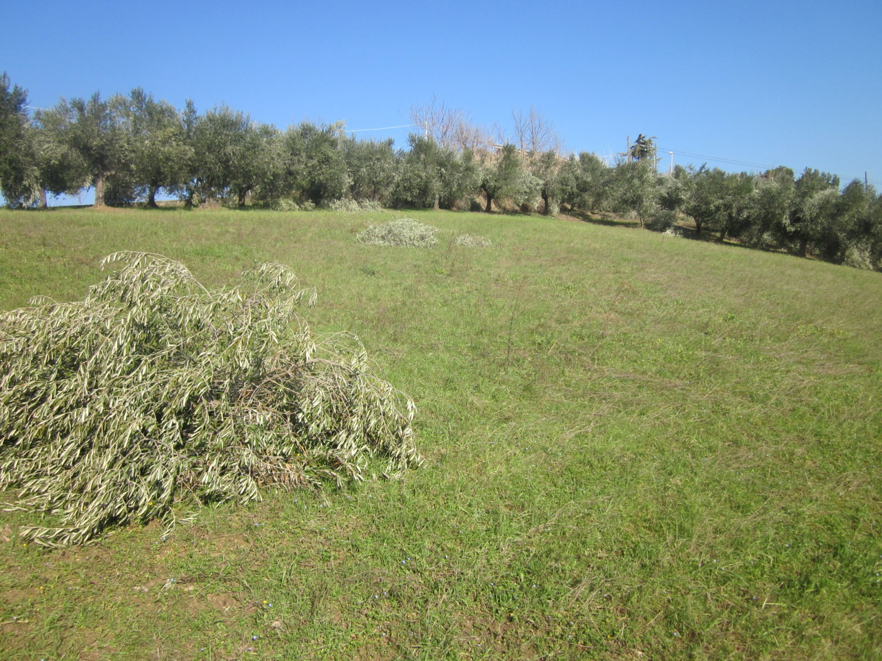 Agricolo a Elice Rif.11129632