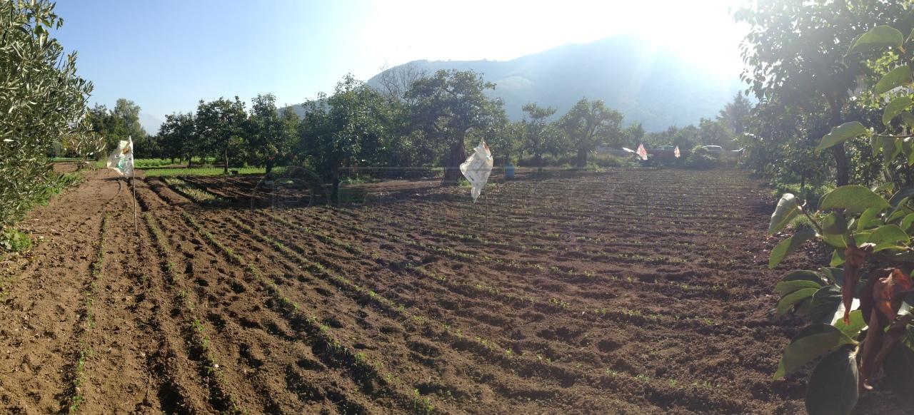 Agricolo - Seminativo a Castel San Giorgio Rif.10035494