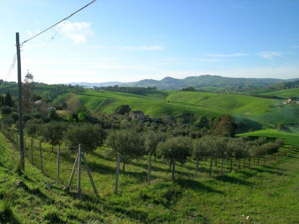 Agricolo - Seminativo a c/da Abbazia Santuzza, Caltanissetta Rif.8464209