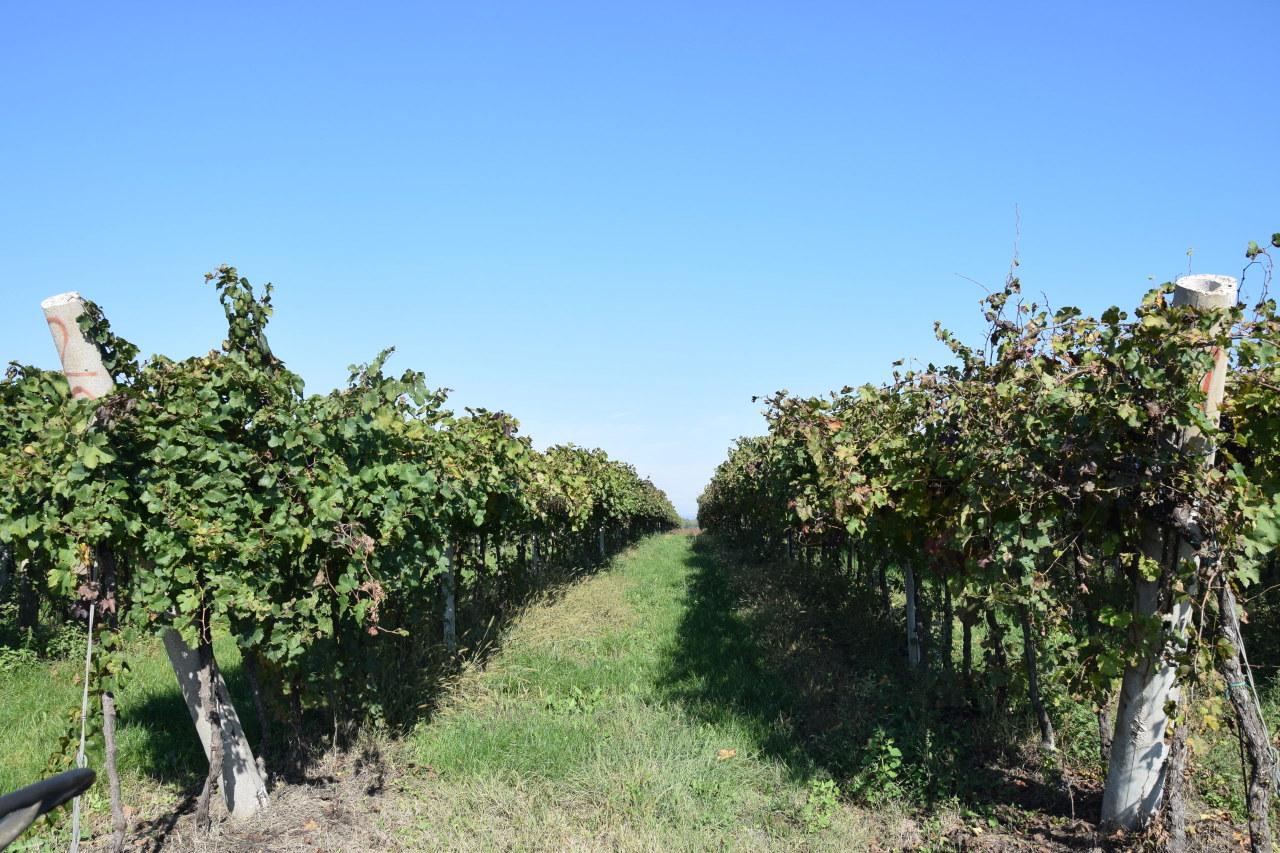 Terreno Agricolo in vendita a Zimella, 1 locali, prezzo € 46.000 | Cambio Casa.it