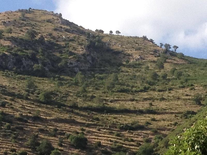 Terreno Agricolo in Vendita a Mercato San Severino