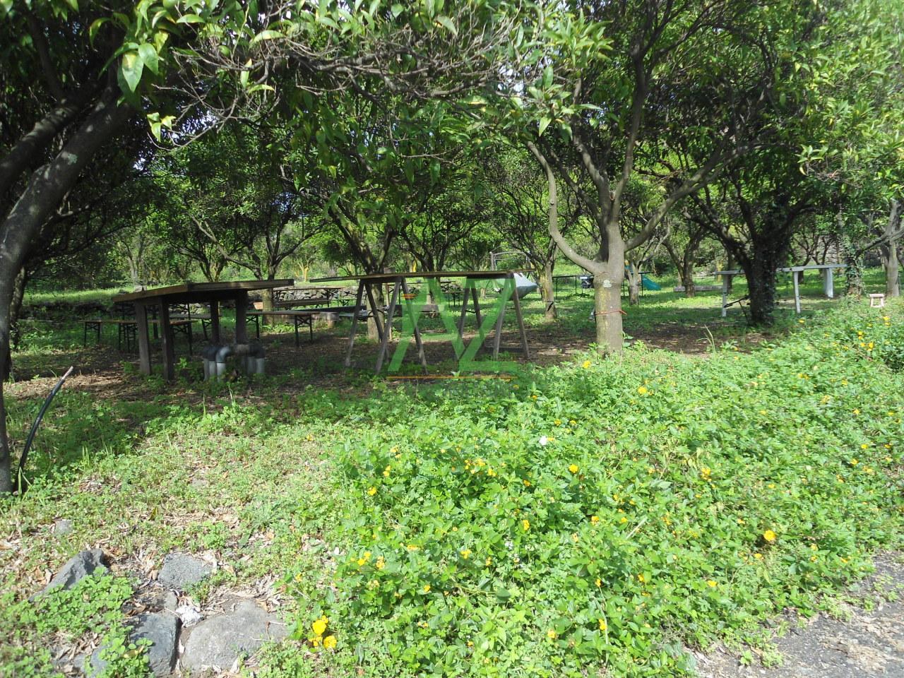 Terreno Agricolo in Affitto a Acireale