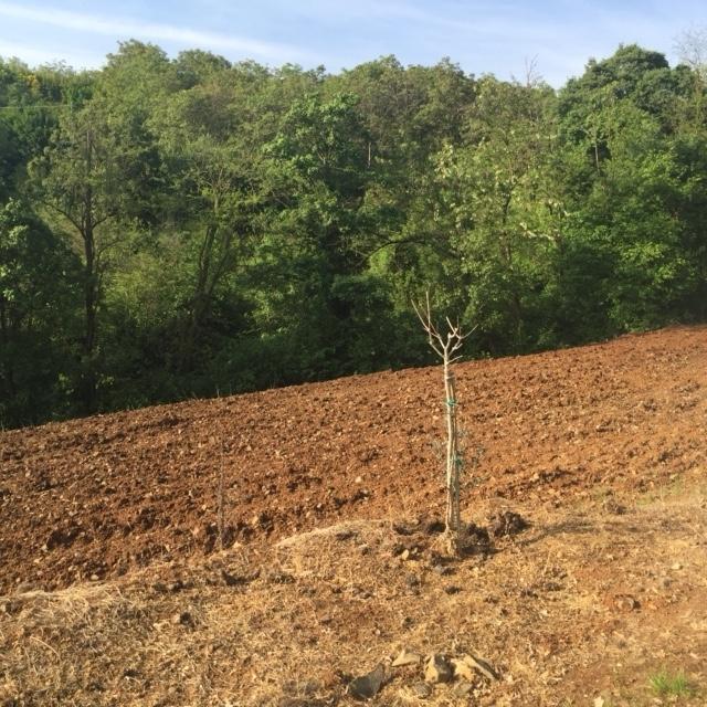 Terreno Agricolo in Vendita a Lonigo