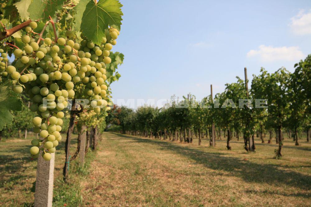 Terreno Agricolo in vendita a Castenedolo, 9999 locali, Trattative riservate   CambioCasa.it