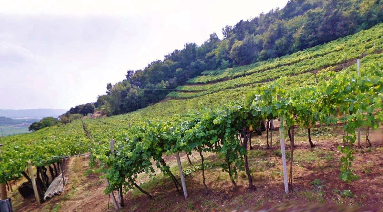 Terreno Agricolo in Vendita a Montebello Vicentino