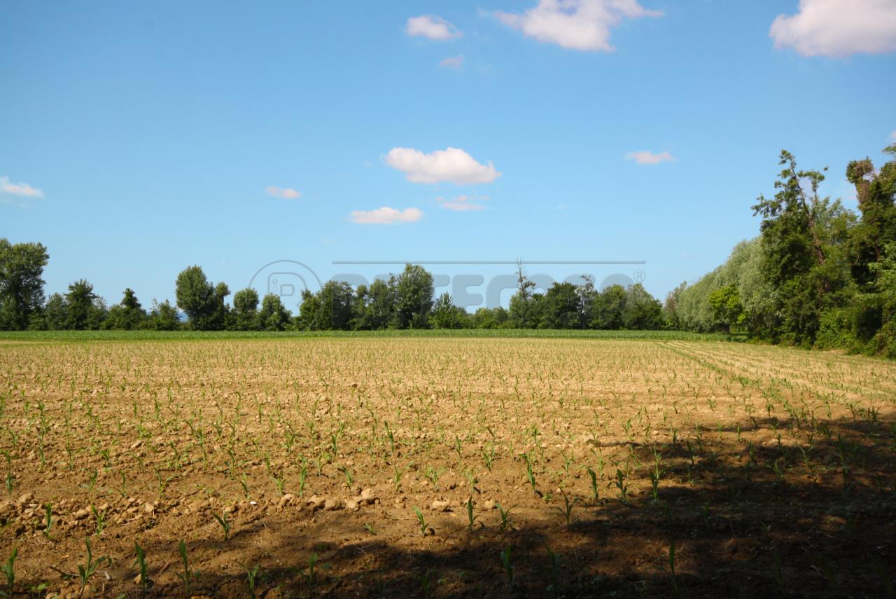 Terreno Agricolo in vendita a Gazzo, 9999 locali, prezzo € 80.000 | Cambio Casa.it