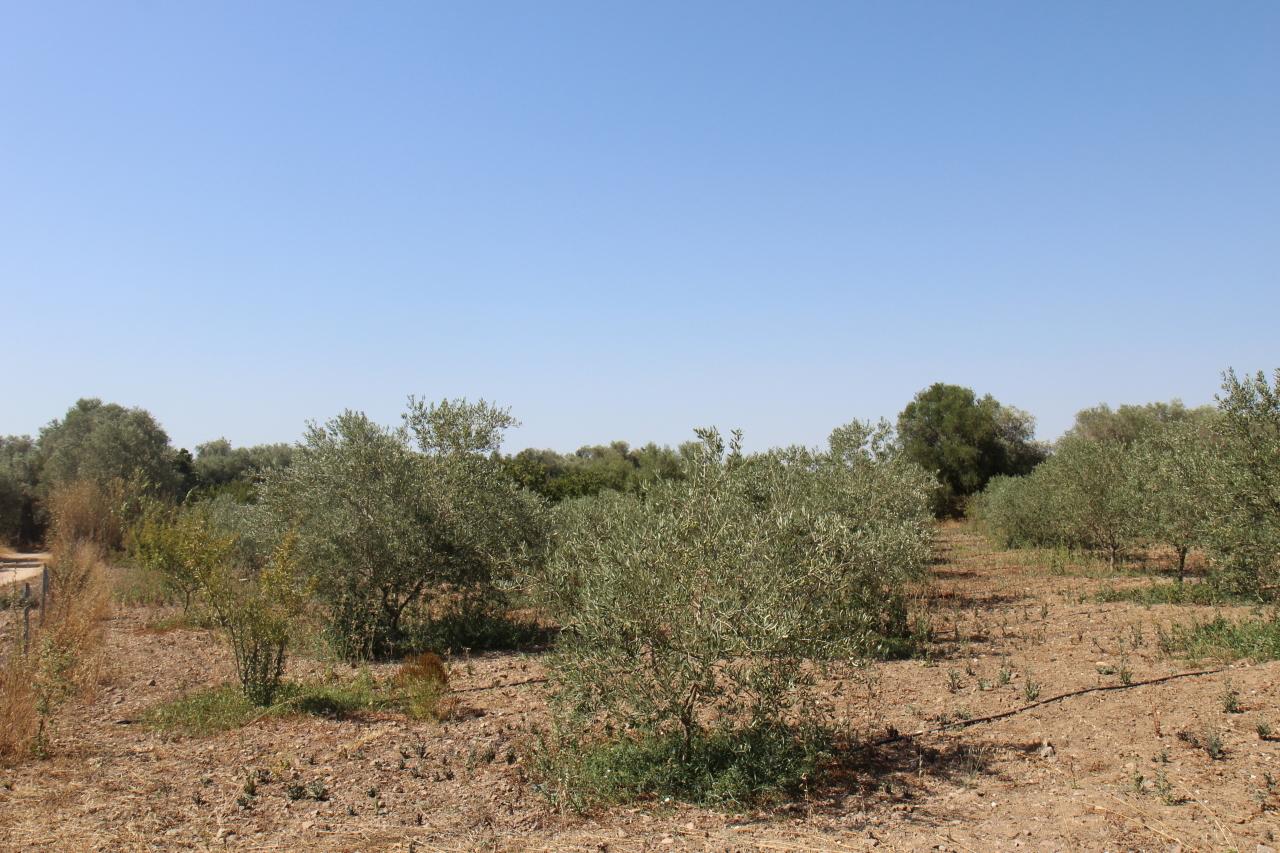 Terreno Agricolo in vendita a San Sperate, 9999 locali, prezzo € 17.000 | CambioCasa.it