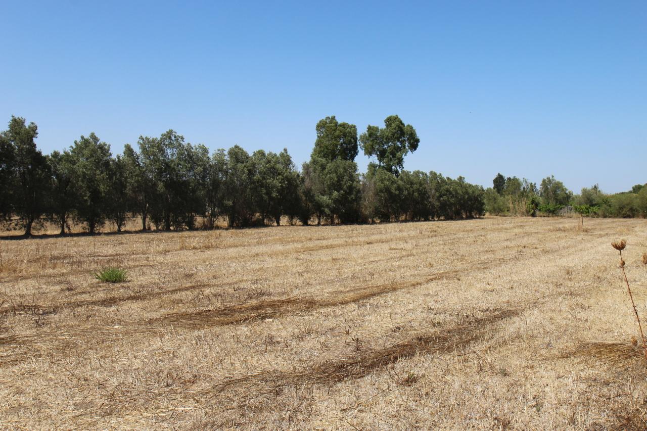Terreno Agricolo in vendita a San Sperate, 9999 locali, prezzo € 35.000 | CambioCasa.it