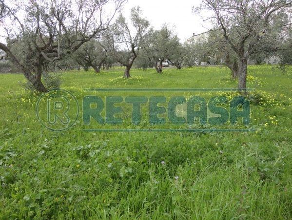 Terreno agricolo in vendita - 2200 mq