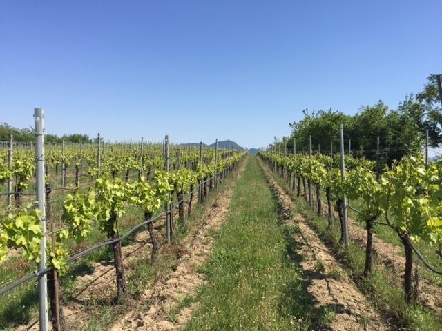 Terreno Agricolo in vendita a Barbarano Vicentino, 1 locali, Trattative riservate | Cambio Casa.it