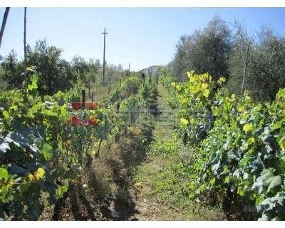 Terreno Agricolo in vendita a Peccioli, 9999 locali, prezzo € 40.000 | CambioCasa.it