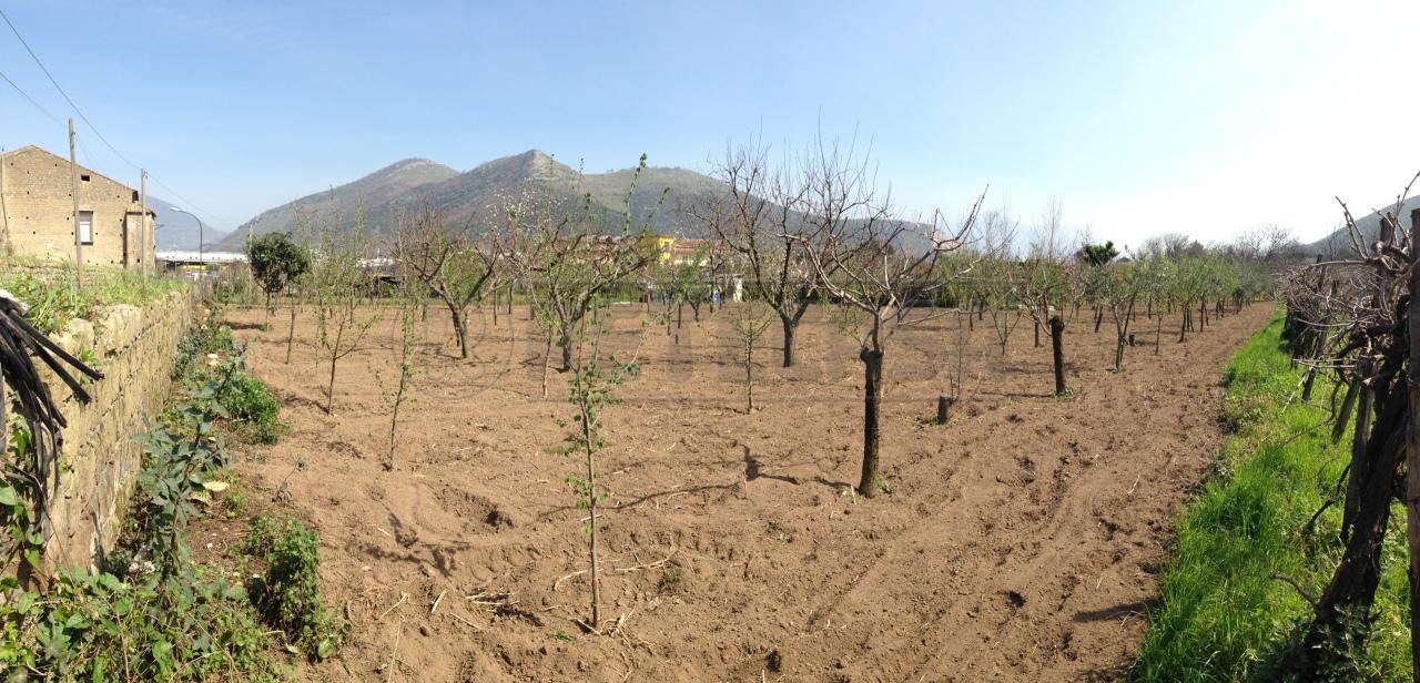 Agricolo - Seminativo a Castel San Giorgio Rif.9981832