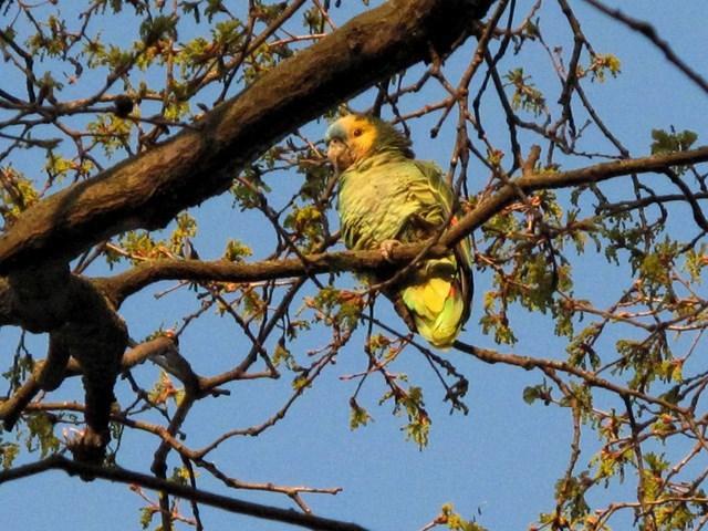 pappagallo grande 3 (Copia).JPG