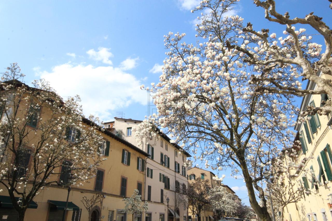 Appartamento Lucca Centro storico IA02937-1 img 12