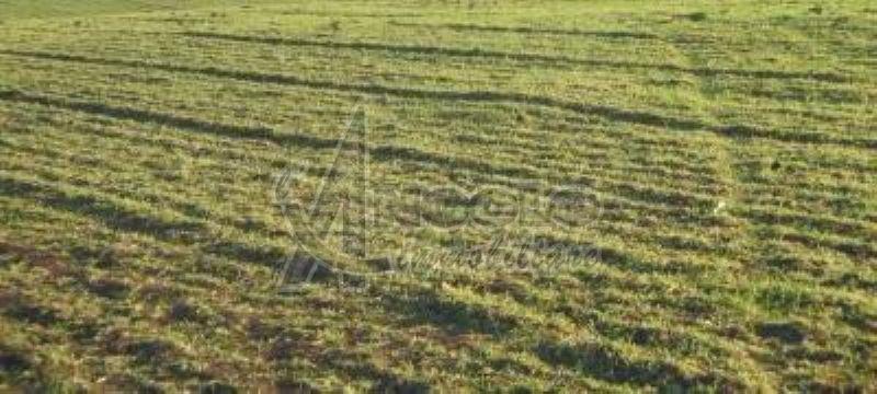 Terreno Edificabile Comm.le/Ind.le in vendita a Canaro, 9999 locali, prezzo € 150.000 | Cambio Casa.it