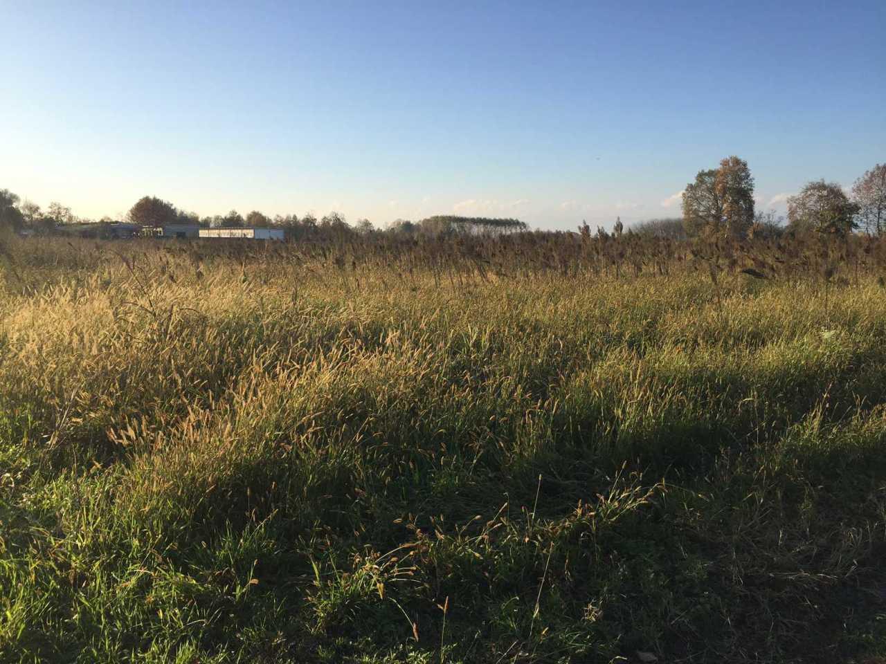 Terreno Agricolo in vendita a San Martino di Lupari, 1 locali, prezzo € 56.000   Cambio Casa.it