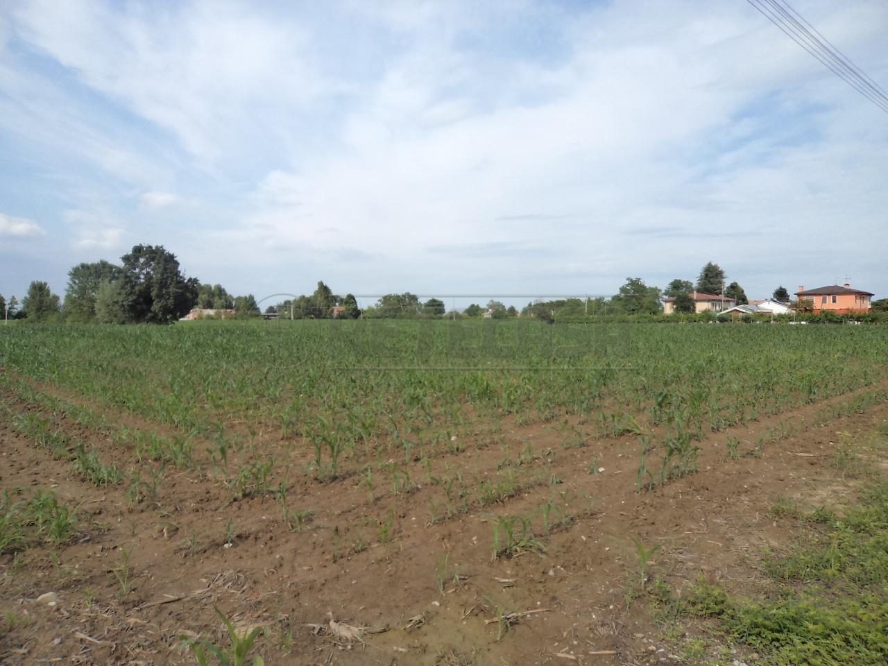 Terreno Agricolo in Vendita a Campodarsego