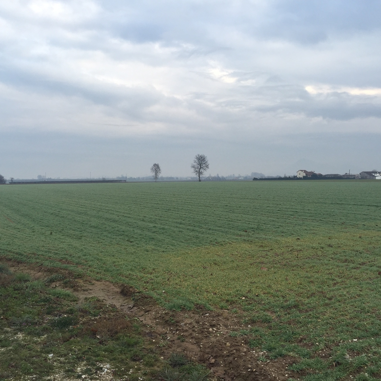 Terreno Agricolo in vendita a Lonigo, 1 locali, Trattative riservate | Cambio Casa.it