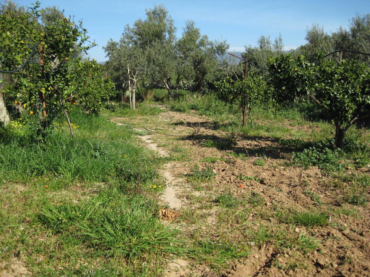 Agricolo - Frutteto a Sant'isidoro, Quartucciu Rif.10091242