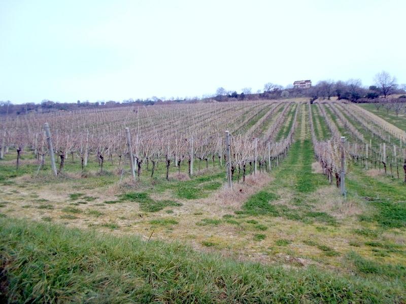 Terreno Agricolo in vendita a Lapedona, 1 locali, prezzo € 390.000 | Cambio Casa.it
