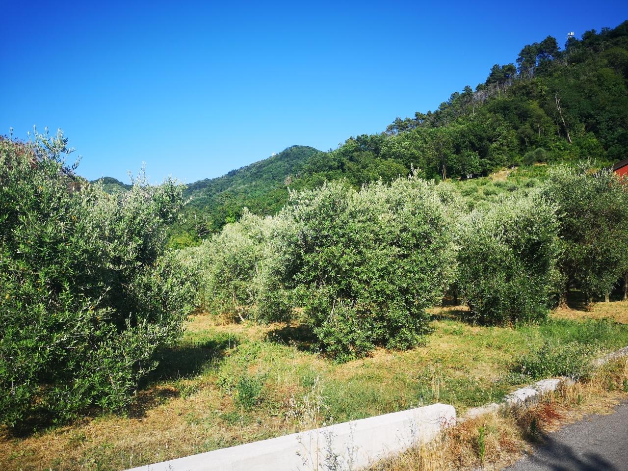 Terreno agricolo in vendita - Luni