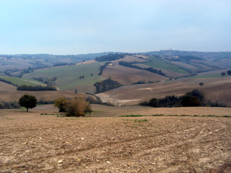 Agricolo - Seminativo a Mondavio Rif.10028803