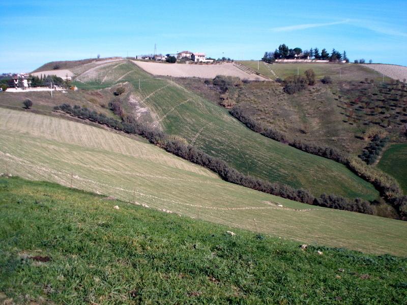 Azienda Agricola in vendita a Maltignano, 2 locali, prezzo € 450.000   Cambio Casa.it