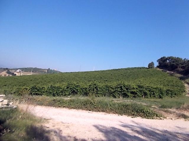 Terreno Agricolo in vendita a Ripatransone, 1 locali, prezzo € 50.000 | Cambio Casa.it