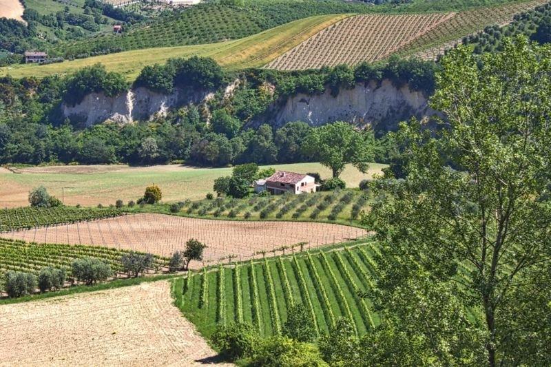 Azienda Agricola in vendita a Carassai, 10 locali, prezzo € 390.000 | Cambio Casa.it