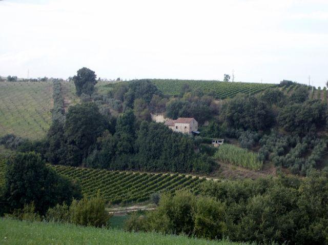 Azienda Agricola in vendita a Massignano, 10 locali, prezzo € 300.000 | Cambio Casa.it